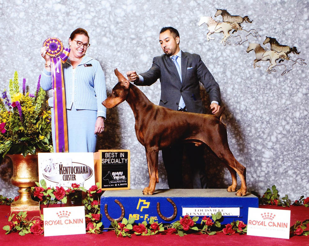 2018 Specialty Shows