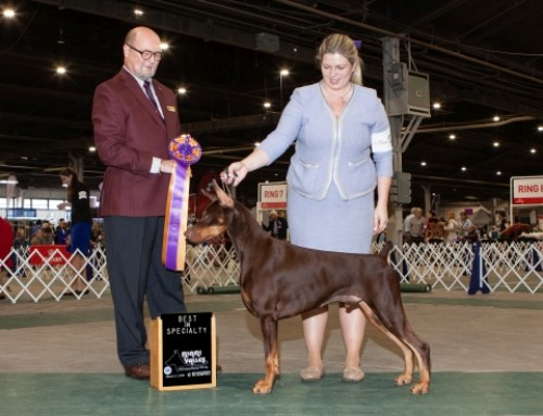 2020 Specialty Show
