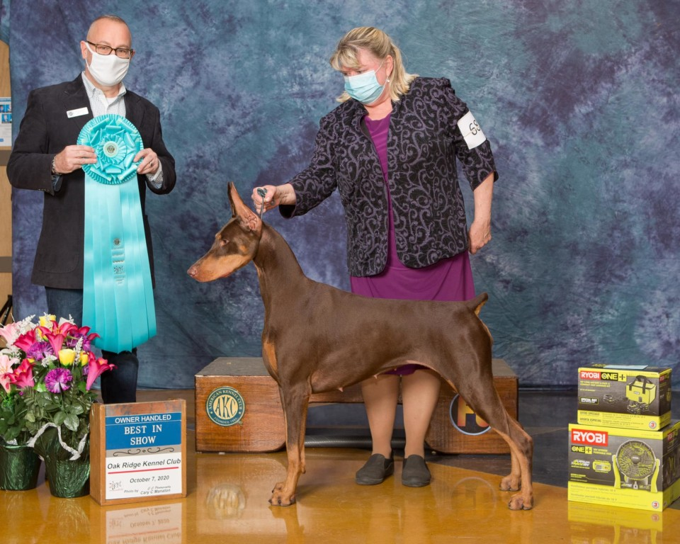 Best in Show Owner Handled